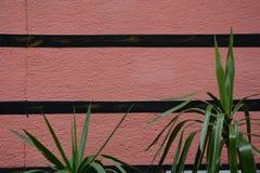 有绿色叶子的墙壁 图库摄影
