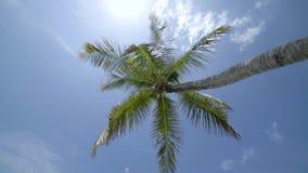 有绿色豪华的叶子的热带可可椰子反对天空蔚蓝 股票录像