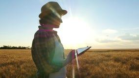 有片剂的年轻女人农夫在一块麦田的手上在日落期间 女孩使用片剂计算出产量 股票视频