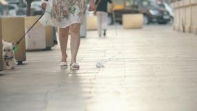 有走的人民和可爱的西部高地白狗的街道 影视素材