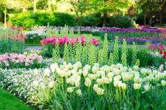 有花的新鲜的草坪 库存照片