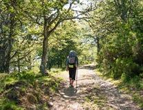 有背包的走孤独的香客Camino de圣地亚哥在西班牙,圣詹姆斯方式  库存照片