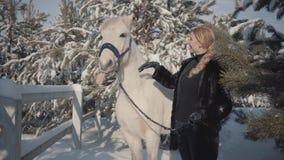 有良种白马的画象逗人喜爱的白肤金发的女孩在篱芭附近 使用与她的白马的年轻女人户外 股票视频