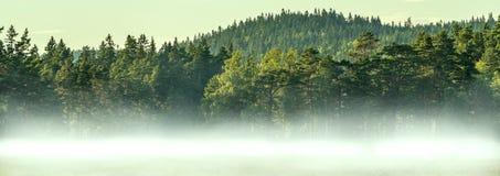 有薄雾的森林全景 免版税库存照片
