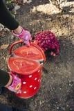 有金属桶浇灌的菊花的女孩 免版税图库摄影