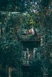 有长得太大的绿叶的阳台 库存照片