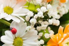 有雏菊的夏天或春天美丽的庭院开花 免版税图库摄影