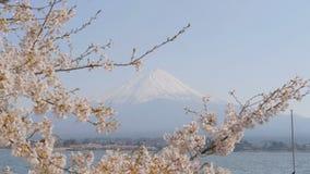 有Mt的佐仓 在Kawaguchiko湖的富士 股票录像