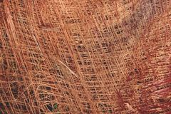 抽象干棕榈纹理背景关闭  免版税图库摄影
