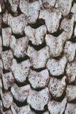 抽象干棕榈纹理背景关闭  免版税库存图片