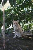 我是女王/王后-所有猫 库存照片