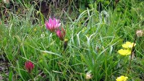 春天在瑞士阿尔卑斯 圣伯纳迪诺 瑞士 库存图片