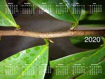 日历在2020年 免版税图库摄影