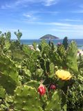 旅途通过里约热内卢 库存照片