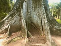 旅途通过里约热内卢 免版税库存图片