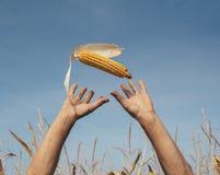 拿着玉米的人被扶养在天空 库存照片