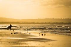 拜伦湾的冲浪者 免版税图库摄影