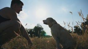 拉布拉多或金毛猎犬坐草并且给爪子他的男性所有者 人火车尾随户外 友谊与 股票视频