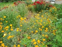 普通的花在庭院里在夏天 免版税库存图片