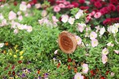 晚樱草芽和开花在庭院里 库存照片
