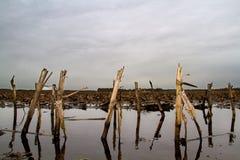 洪水区域在惨淡的天 免版税库存照片