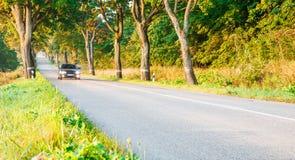 新的柏油路在森林里 图库摄影