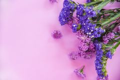 新紫色软的桃红色的春天紫色花延命菊和statice花框架构成植物 库存图片