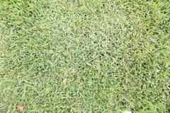 新近地被割的绿草草坪背景宽射击  库存图片