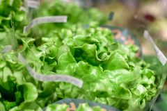 新鲜的沙拉捆绑在商店地方 鲜美新鲜的沙拉叶子 软绵绵地集中 概念吃健康 库存图片