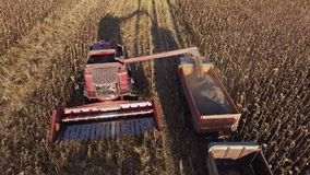 收获向日葵 组合卸载在卡车的向日葵种子 照相机飞行  股票视频