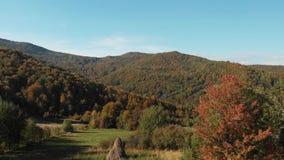 收获在小山的干草 喀尔巴阡山脉的山顶视图 影视素材