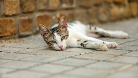 放置在路面的困离群猫 免版税库存图片