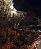 洞在森林里 库存照片