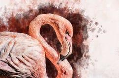 火鸟的Portret,水彩绘画 红色火鸟Phoenicopterus ruber,动物学例证,手图画 皇族释放例证