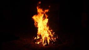 灼烧的火 篝火 关闭烧在黑背景,慢动作的火焰 股票视频