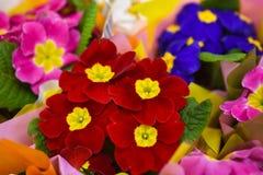 礼物花束领域明亮的花 免版税图库摄影