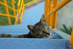 """Ç¥ž del ¼ de /eyesight/çœ del primer cat/ç del ‰ del ¹ del å del † del ™çš de un çŒ del """""""" Fotografía de archivo libre de regalías"""