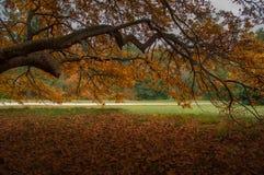 秋天在秋天公园 与黄色叶子的大分支 免版税图库摄影