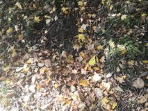 The leaves in the autumn woods fall to the ground royalty free stock photography