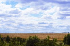 秋天玉米田种植园和大云彩在天空 免版税库存图片