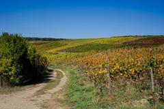 秋天颜色的葡萄园沿路线叫Weinstrasse,德国 免版税图库摄影