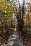 秋天阿卡迪亚的木板走道 免版税库存图片