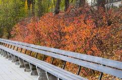 空的长木凳在秋季公园 免版税库存图片