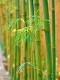 竹子在公园 免版税库存图片