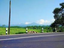 米领域的看法从路的边的是非常有凉快的空气的美丽,农村路 免版税库存照片