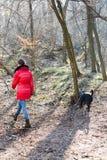 红色夹克的青少年的女孩遛与狗的在森林-冷的早晨时间里 库存照片