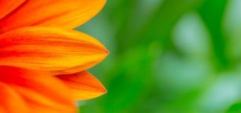 红色花瓣关闭,春天夏天自然完善的宏观照片  库存照片