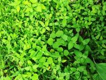 绿色叶子在庭院里 库存照片