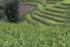 绿色米大阳台细节在Sapa,老街市,越南环境美化 免版税库存图片