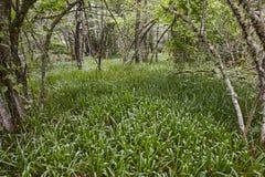 绿色豪华的森林风景 Muniellos生物圈储备 航天学 免版税库存图片